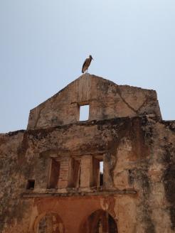 Ruínas de Rabat: um pouco da história dos Romanos no país